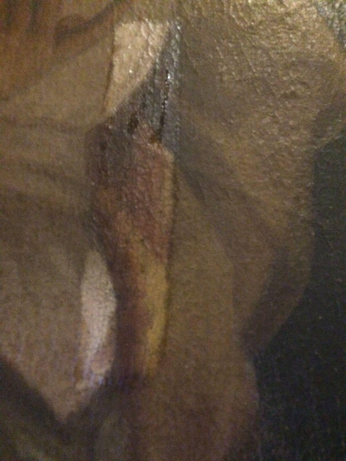 Dipinto Madonna con santi (3)